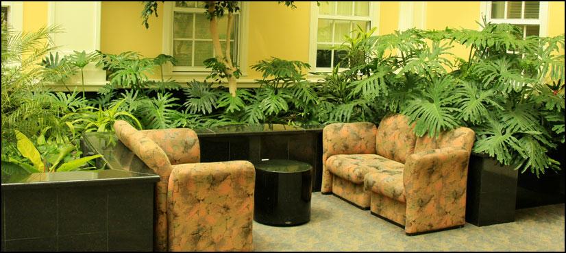 گھر میں پودے اگانے کے فوائد سے واقف ہیں؟