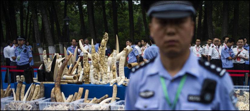 ہاتھی دانت کی تجارت ۔ دنیا کی سب سے بڑی مارکیٹ بند ہوجائے گی؟