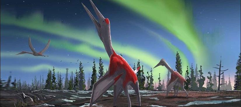 ہوائی جہاز جتنے پرندے کی باقیات دریافت