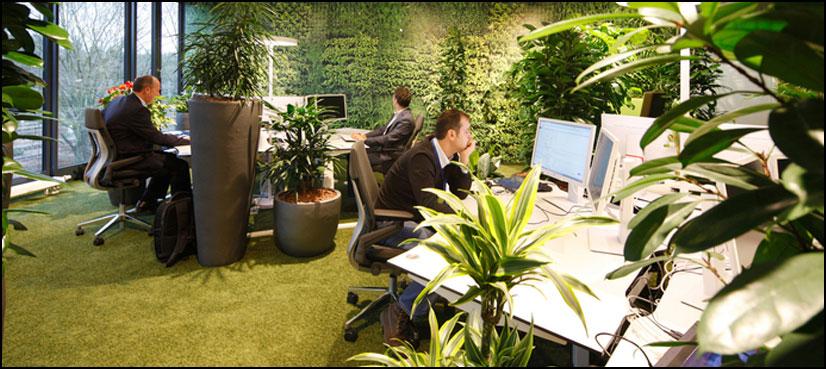 ماحول دوست دفاتر ملازمین کی تخلیقی صلاحیت بہتر بنانے میں معاون