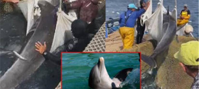 انسان دوست مچھلی مچھیروں کے بچھائے گئے جال میں پھنس گئی، پھر کیا ہوا؟