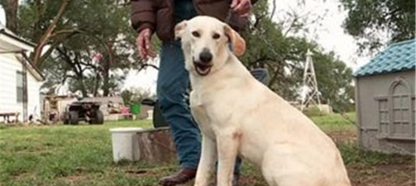 امریکا میں کتے کی فائرنگ سے خاتون زخمی