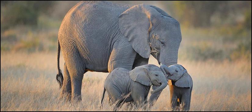 جہلم: لاکھوں سال قدیم ہاتھی کا جبڑا دریافت