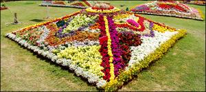 کراچی میں پھولوں کی خوش رنگ بہار