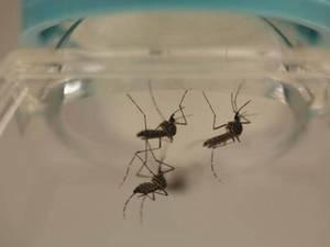 ڈینگی وائرس کے خلاف ایک مکمل ویکیسن تیار کرلی گئی