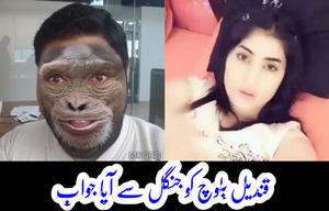 یک پاکستانی کا قندیل بلوچ کو جواب، آفریدی پر غداری کا الزام لگانیوالوں کو بھی رگڑدیا